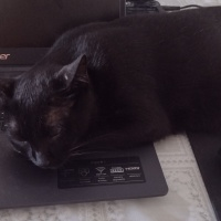 Sobre gatos em teclados