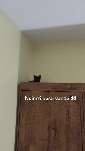 Noir só observando 👀